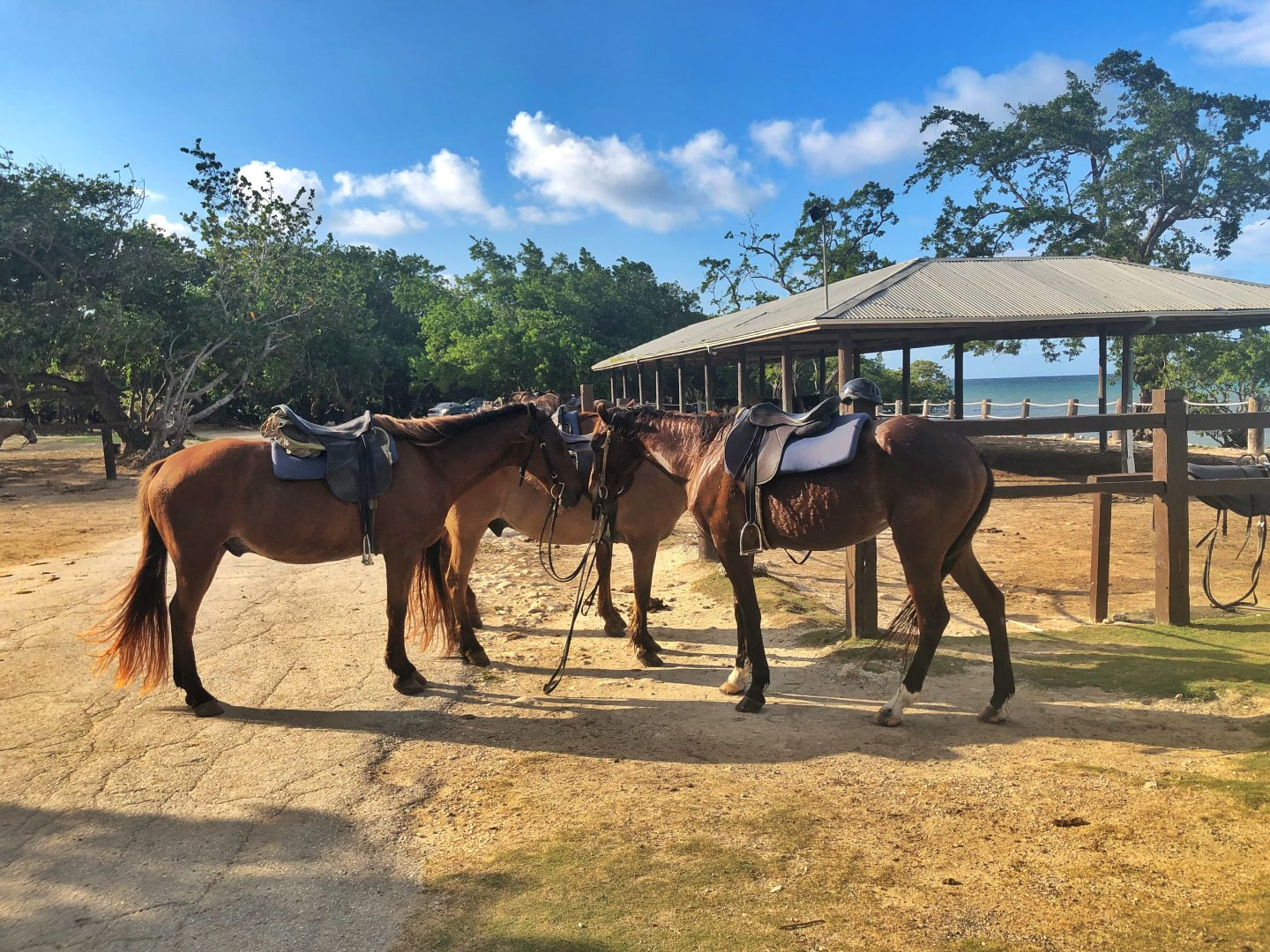 Horses on Chukka Caribbean ranch.